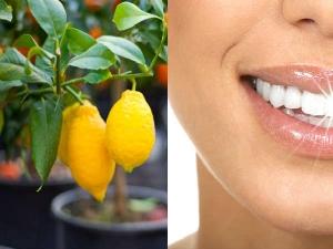 Special Tooth Pack Using Lemon Tree Leaves White Teeth