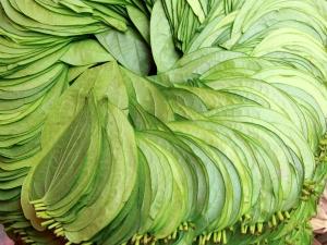 How Use Betel Leaves Get Prosperity