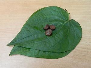 Significance Of Betel Leaf In Hindu Customs