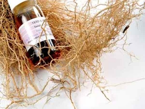 Beauty Benefits Of Vetiver Oil