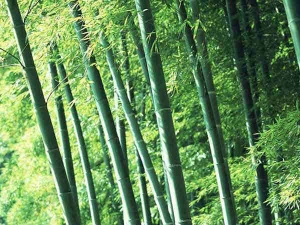 Grow Bamboo In This Area For Prosperity And Wealth