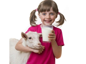 Goat Milk Benefits For Your Kid