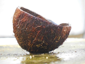 Health Benefits Of Coconut Shell Boiled Water