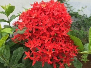These Are The Best As Well As The Worst Plants According Vastu