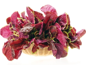 Benefits Of Amaranth And Its Side Effects