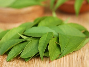 Chew Three Curry Leaves On Empty Stomach