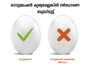 Ways To Improve Your Egg Quality For Fertility