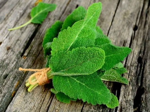 Benefits And Uses Of Sage For Health