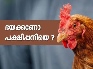Bird Flu Symptoms Causes And Risk Factors