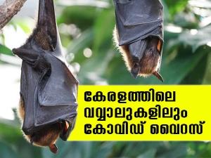 Presence Of Bat Coronavirus In Two Indian Bat Species Icmr Study Finds
