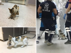 Stray Cat Brings Sick Kitten To Hospital Medics Rush To Their Aid