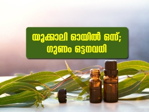 Eucalyptus Oil Benefits And Uses