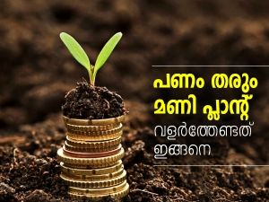 Vastu Shastra How To Place Money Plant At Home