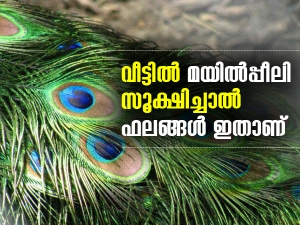 Astrological Benefits Of Peacock Feather In Malayalam