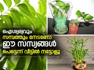Lucky Plants To Keep In Home For Prosperity