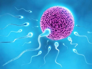 How To Increase Sperm Count 14 Tips To Boost Fertility Naturally