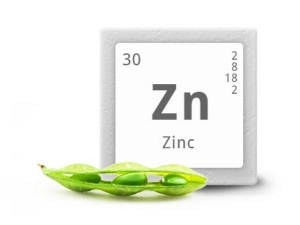 Zinc Rich Foods To Boost Your Immunity