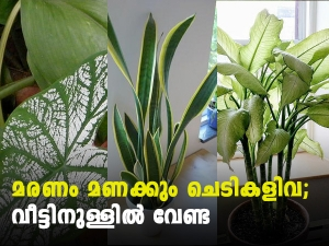 Poisonous Houseplants Their Health Effects