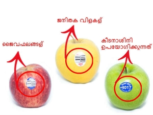 What Do Those Fruit Stickers Tell Us About The Fruits