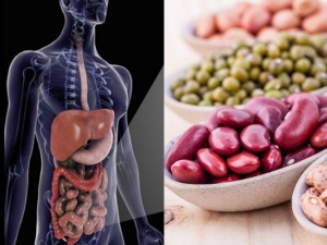 How Pulses Help To Prevent And Suppress Cancer