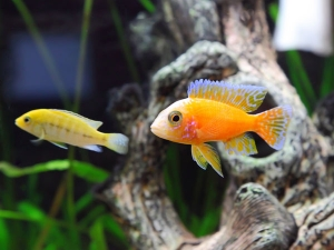 How To Attract Wealth With A Feng Shui Aquarium