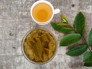 Health Benefits Of Guava Leaves Tea