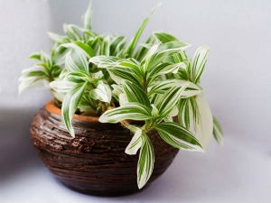 Benefits Of Placing A Snake Plant Inside Your Home