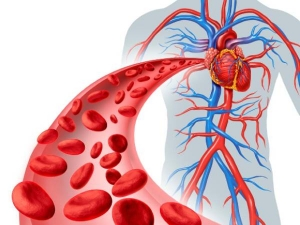 Foods That Naturally Cleanse Your Blood