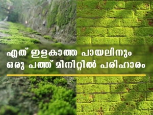 Tricks You Can Easily Get Rid Of Moss In Malayalam