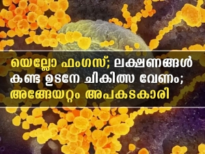 What Is Yellow Fungus Infection Causes Symptoms Treatment All You Need To Know In Malayalam