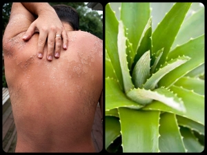 Things You Can Do With An Aloe Vera Plant
