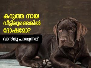 Vastu For Pets What Does Vastu Say About Keeping A Dog In The House