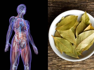 Health Benefits Of Burning Bay Leaves In Malayalam
