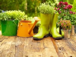 Why You Should Sprinkle Sugar In Garden