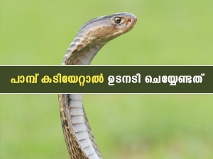 Snakebite Treatment First Aid Information For Snakebite In Malayalam