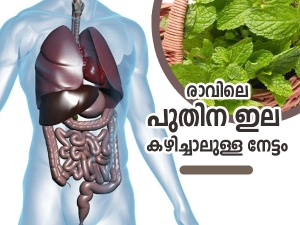 Health Benefits Of Eating Mint Leaves Daily In The Morning In Malayalam