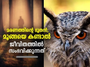 What Does It Mean When You See An Owl In Malayalam
