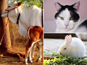 Lucky Animals For Home As Per Hindu Religion In Malayalam