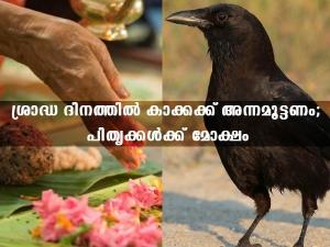 Pitru Paksha Crow Significance Why We Feed Crows In Shradh In Malayalam