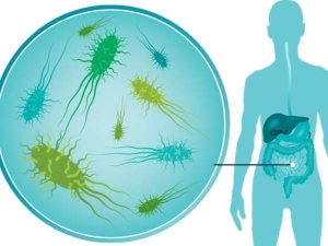Probiotic Food Can Help Build Immunity In Adults In Malayalam