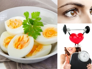 World Egg Day Know The Health Benefits Of Eating Eggs Every Day In Malayalam