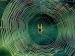 വീട്ടിലെ ചിലന്തി വല വരാനിരിക്കും ദാരിദ്ര്യലക്ഷണം